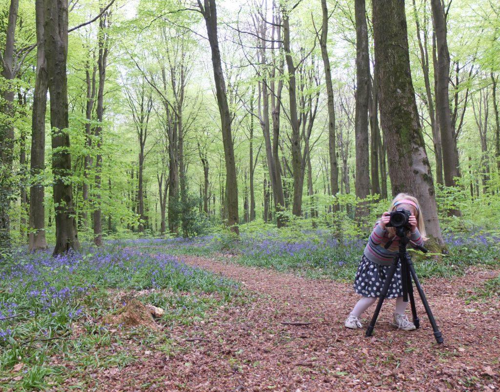 Monday Inspiration Bluebell Woods - Illustration by Jonathan Chapman