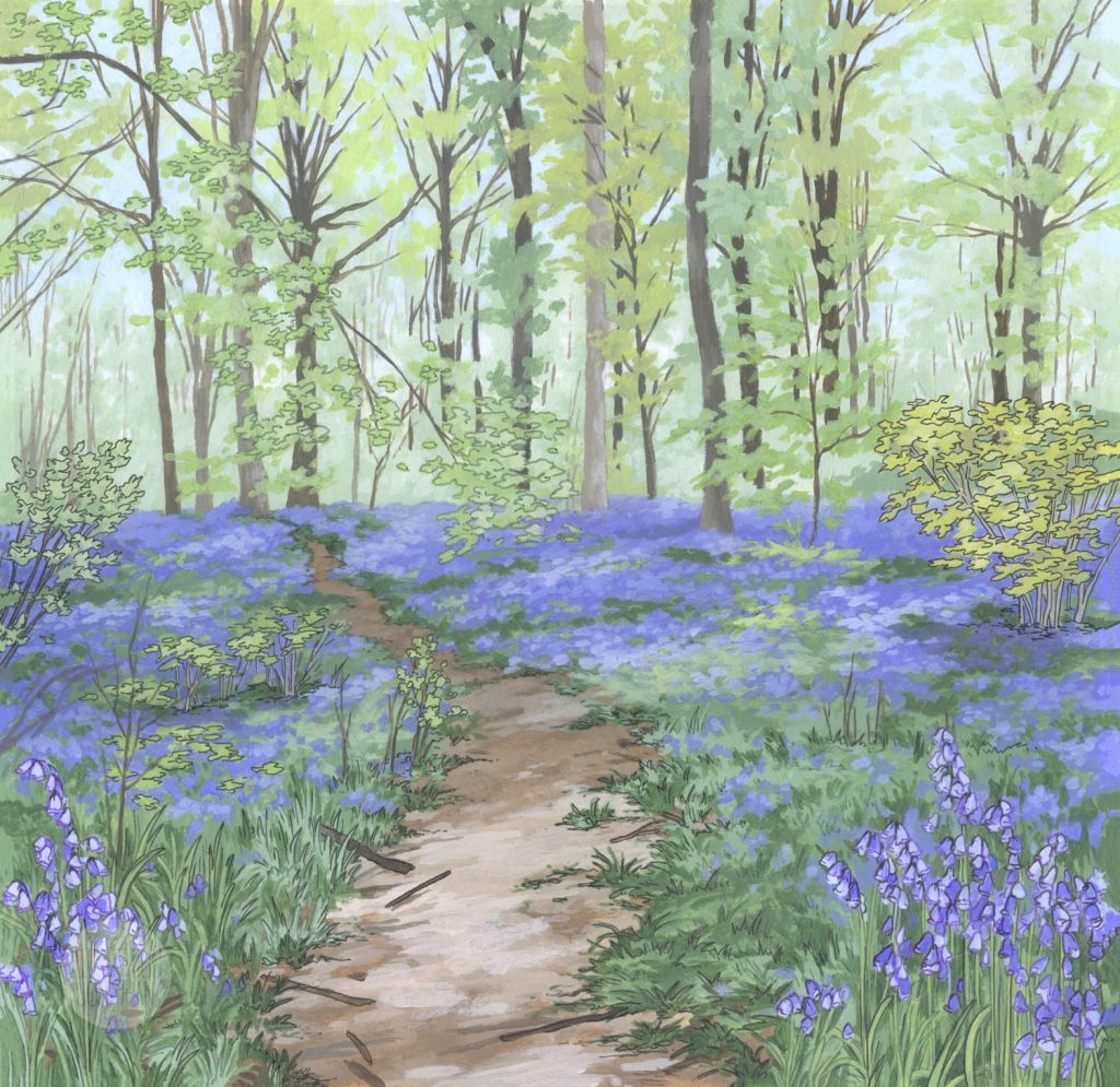 Painting of Bluebell Woods created by Illustrator Jonathan Chapman